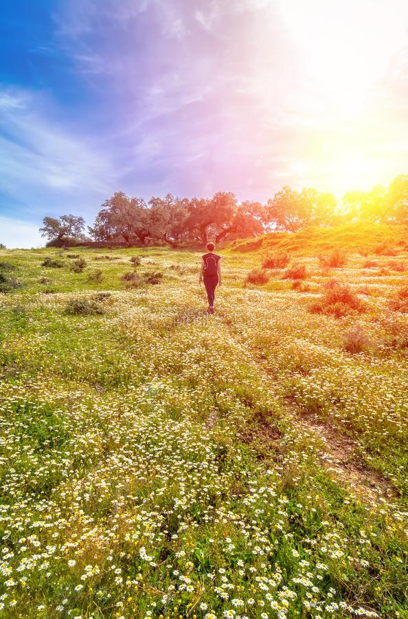 Traveling woman with backpack  walking in flowery field. Blue sky and Sunny spring day, rear view. Freedom concept background royalty free stock photography