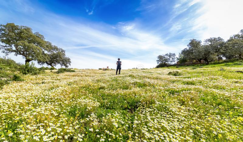 Traveling woman with backpack  walking in flowery field. Blue sky and Sunny spring day, rear view. Freedom concept background royalty free stock photos