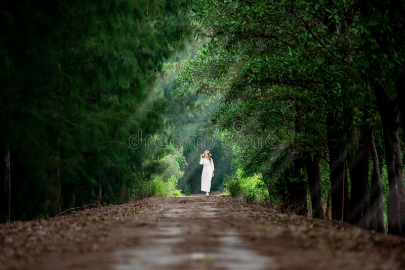 A traveller woman walks in the middle walk way of green pine Forrest in summer in Sakonnakhon,Thailand. stock photography