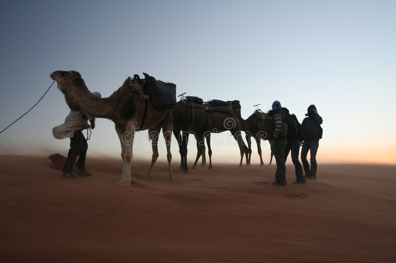 Travellers on sand storm. Erg Chebbi sand dunes in the Sahara Desert (Hassi Labiad and Merzouga, Morocco). Travellers with camels stock image