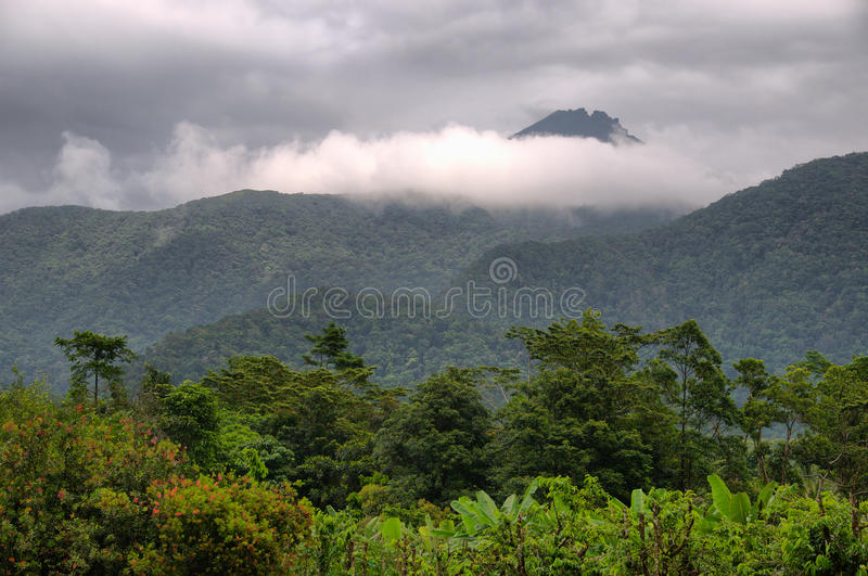 Travelling the Daintree National Park stock image