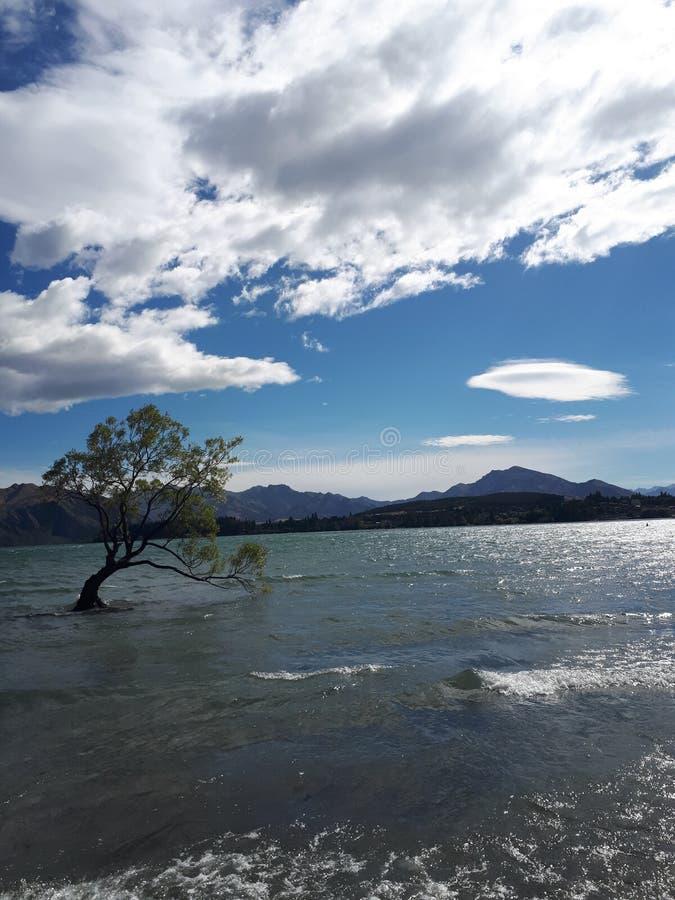 Wanaka Tree New Zealand stock photography