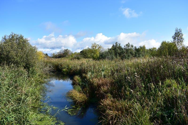 Traverser de grands arbustes à herbes en bordure du village, ciel bleu images stock
