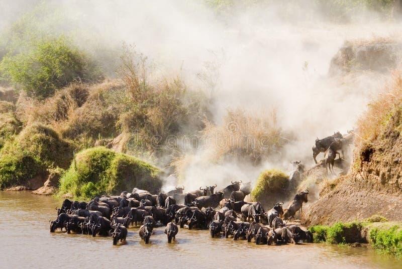 Traverser le fleuve de Mara photos stock