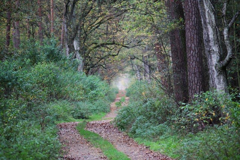 Traverser une forêt d'automne photo libre de droits
