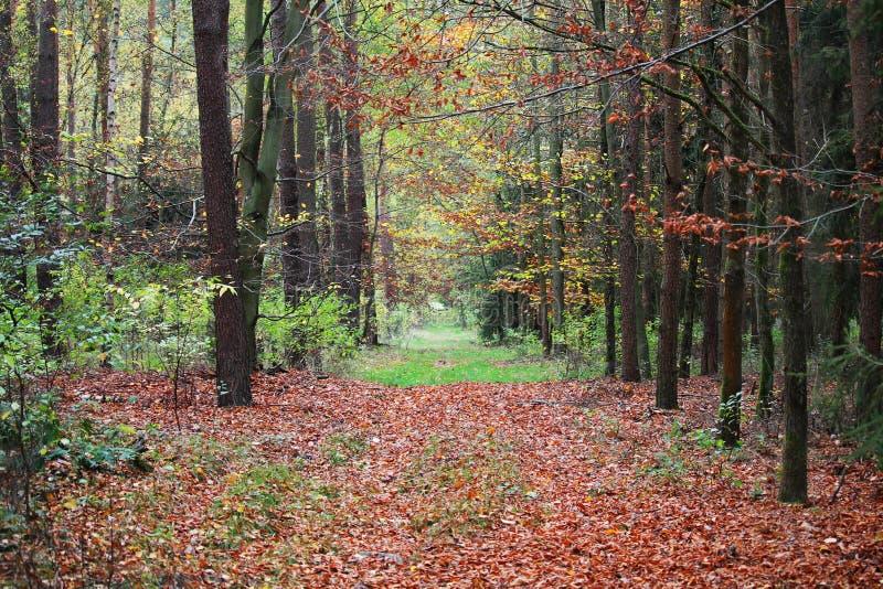 Traverser une forêt d'automne photos libres de droits