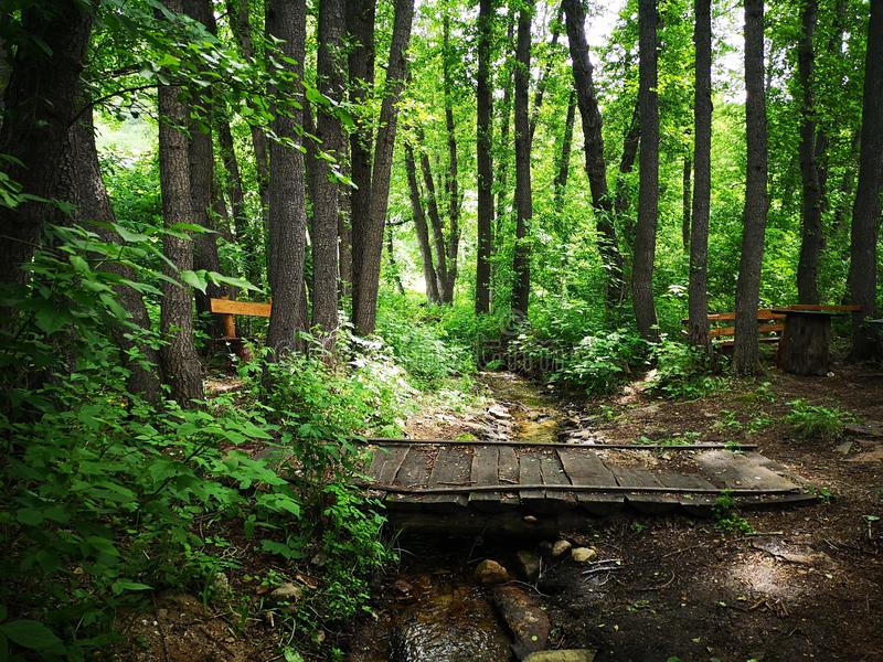 Travesía de madera sobre una corriente en un bosque de la montaña fotos de archivo libres de regalías