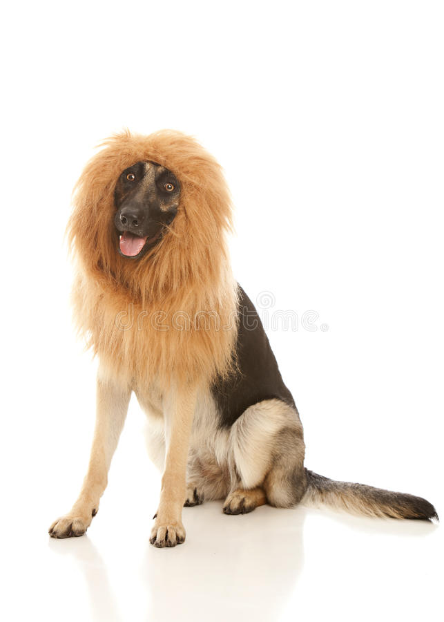 Travestimento canina immagine stock