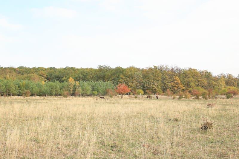 Traviny Nature Reserve, Czech Republic royalty free stock photography
