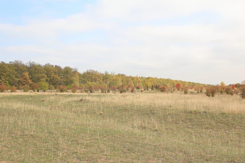 Traviny Nature Reserve, Czech Republic stock images