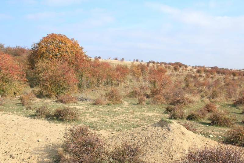 Traviny Nature Reserve, Czech Republic stock photos