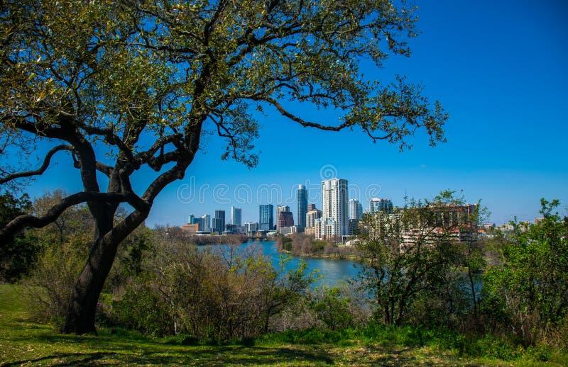 Travis Heights Overlook Amazing Tree que tuerce sobre Austin Texas Skyline Colorado River foto de archivo libre de regalías