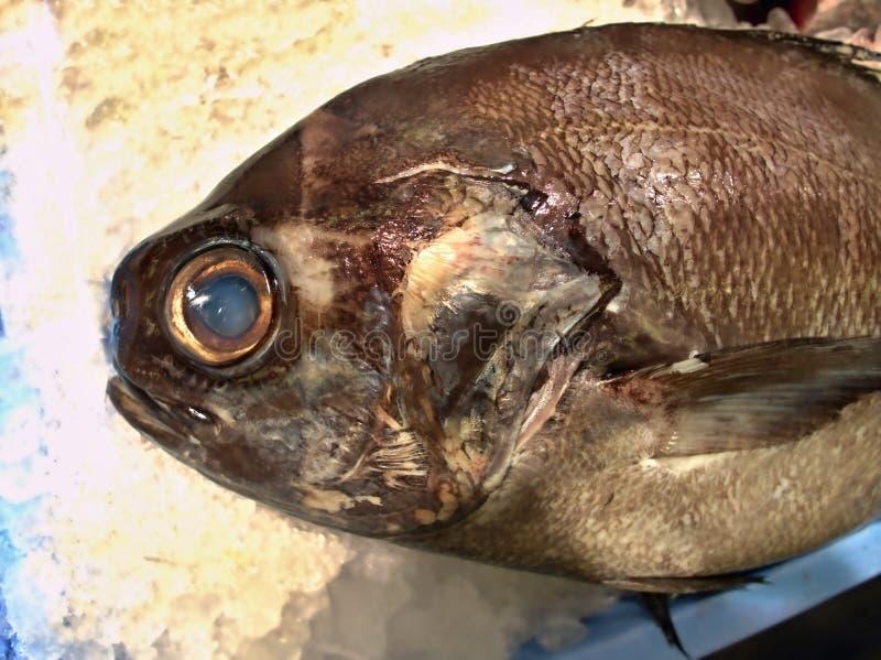 Travou recentemente peixes no gelo drapejado no close up fotos de stock royalty free