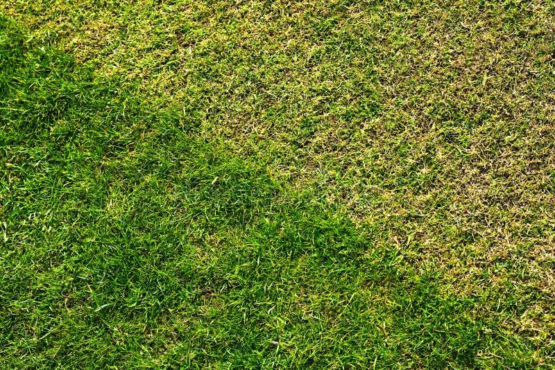Download Trawa gazon obraz stock. Obraz złożonej z łata, zbliżenie - 25161825