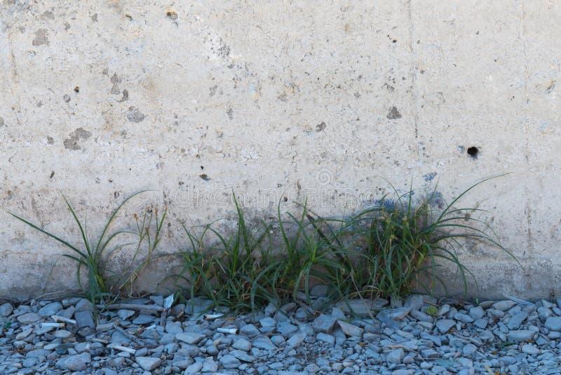 Trawa i grat na otoczaku przed betonową ścianą obrazy stock