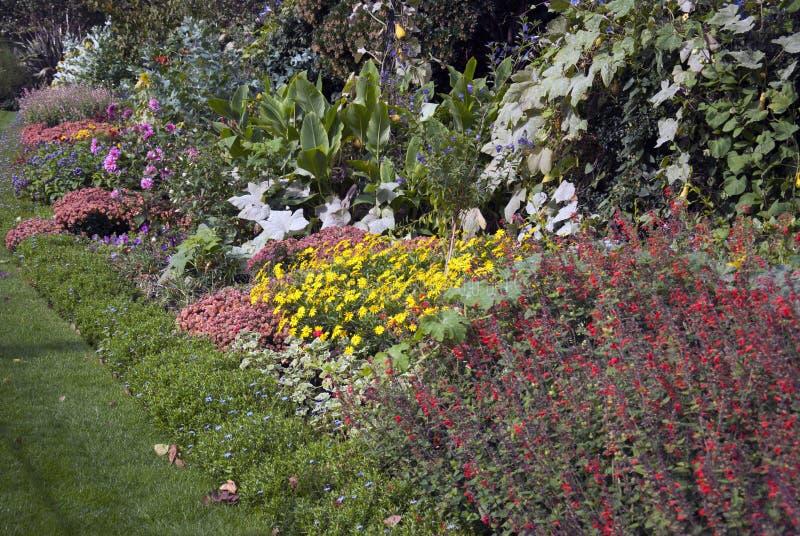 Trawa i kwiaty fotografia royalty free