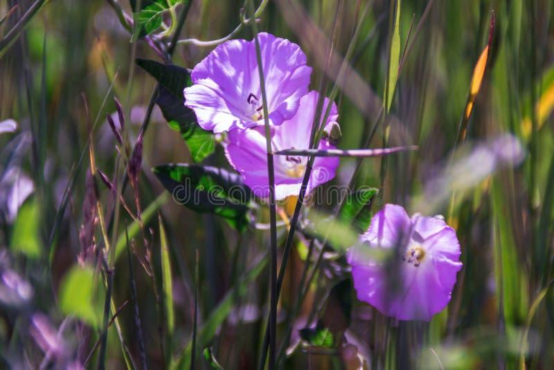 Trawa i kwiaty w polu zdjęcia stock