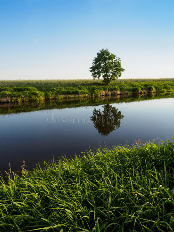 Trawa i Osamotniony drzewo przy Małą rzeką obraz royalty free