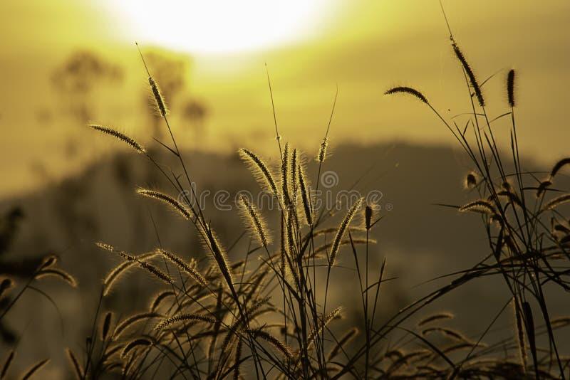 Trawa i rozmyty tło wizerunek słońce w ranku zdjęcie royalty free