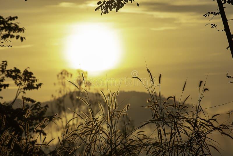 Trawa i rozmyty tło wizerunek słońce w ranku obraz stock