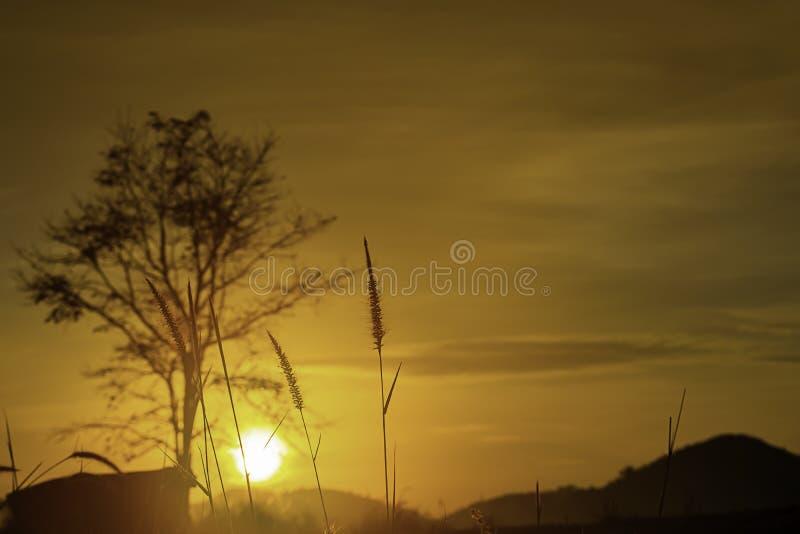 Trawa i rozmyty tło wizerunek słońce w ranku zdjęcie stock