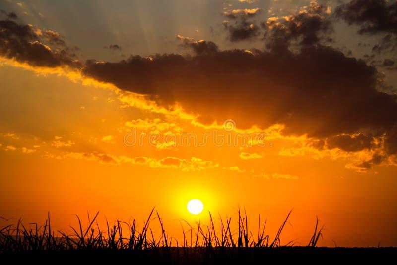 Trawa i słońce obraz royalty free