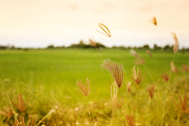 Trawa i wiatr w wieczór zdjęcia stock