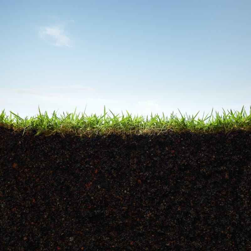 Trawa i ziemia obraz stock