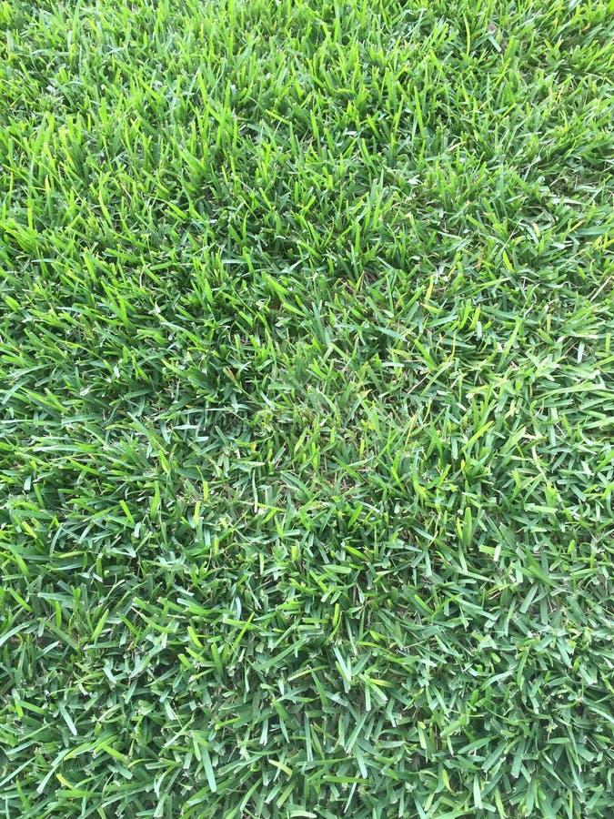 Trawa jest zawsze zielona w Floryda 2 obraz stock