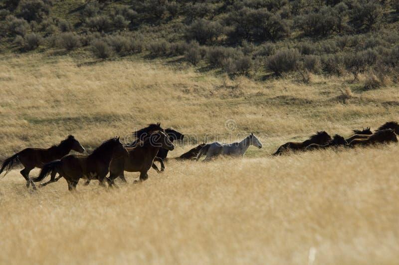 trawa konie się dziki wysoki fotografia royalty free