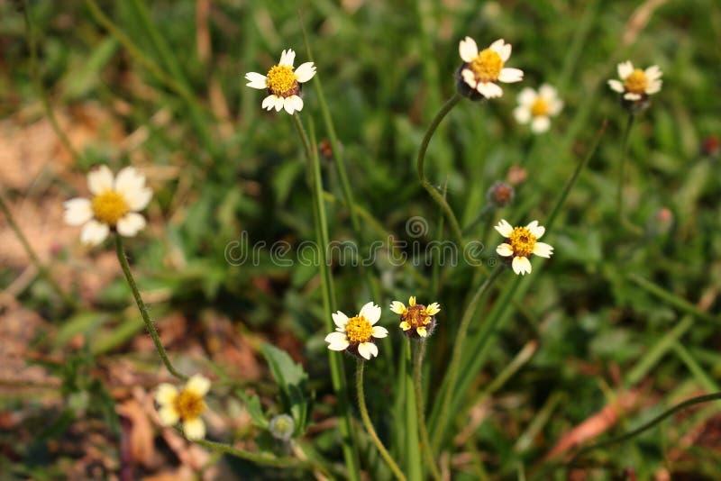 Trawa kwiat obrazy royalty free