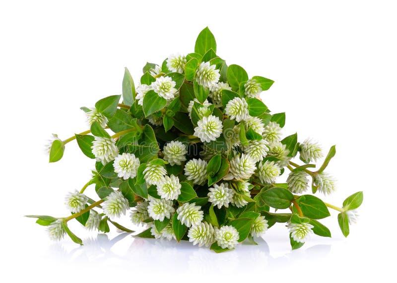Trawa kwiat zdjęcia royalty free