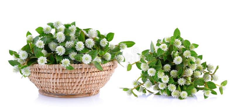 Trawa kwiat zdjęcia stock