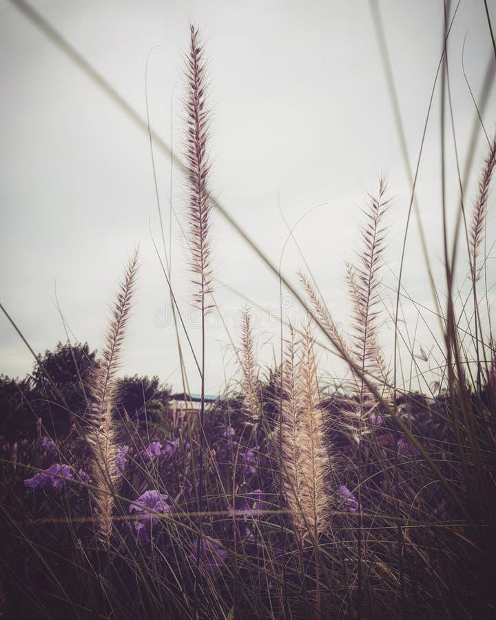 Trawa kwiat i purpura kwiat obraz royalty free