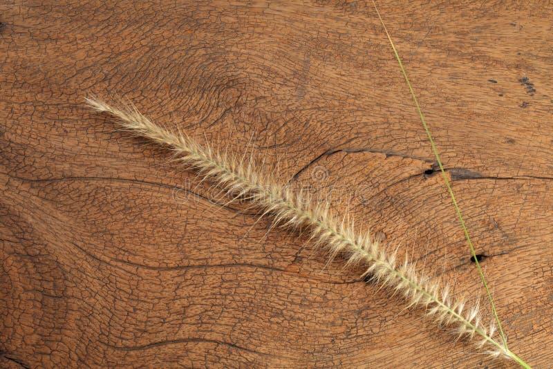 Trawa kwiat na ciężkim drewnie zdjęcia stock