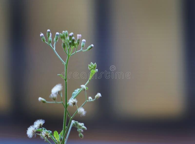 Trawa kwiat na lecie obraz royalty free