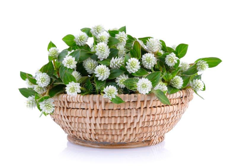 Trawa kwiat w koszu zdjęcie stock