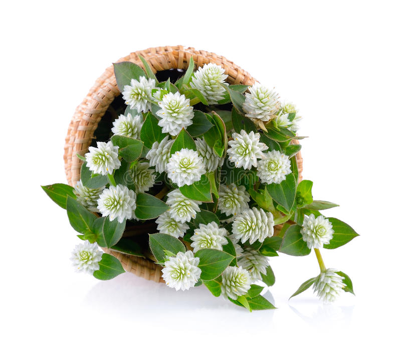 Trawa kwiat w koszu obrazy stock