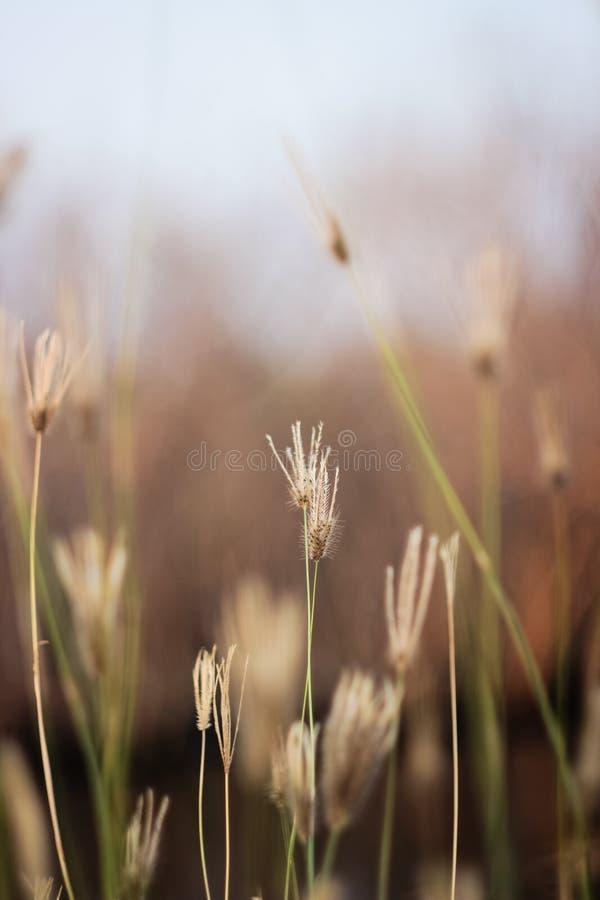 Trawa kwiat w trawy polu na brown tle obraz stock