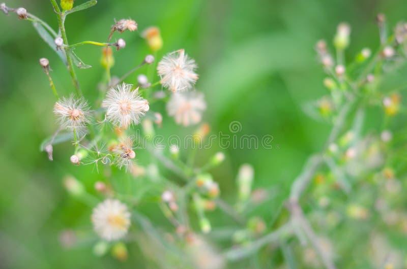 Trawa kwiatu miękka ostrość obrazy royalty free