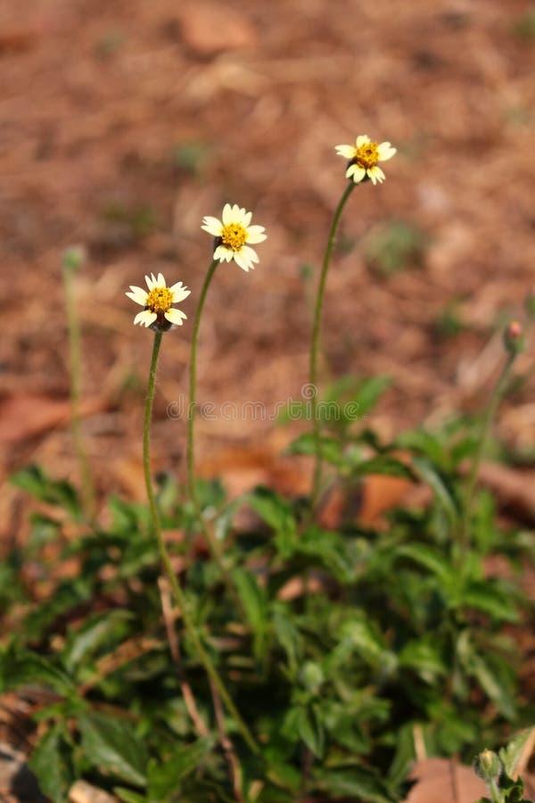 Trawa kwiatu tło zdjęcie royalty free
