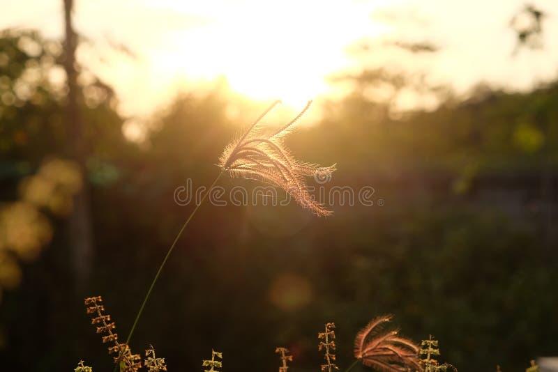Trawa kwiaty obrazy royalty free
