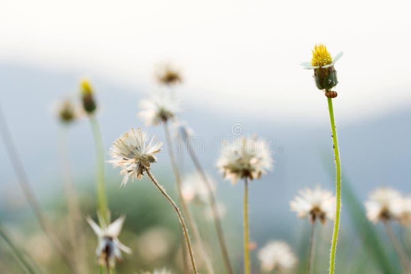 Trawa kwitnie selekcyjną ostrość z płytką głębią pole fotografia royalty free