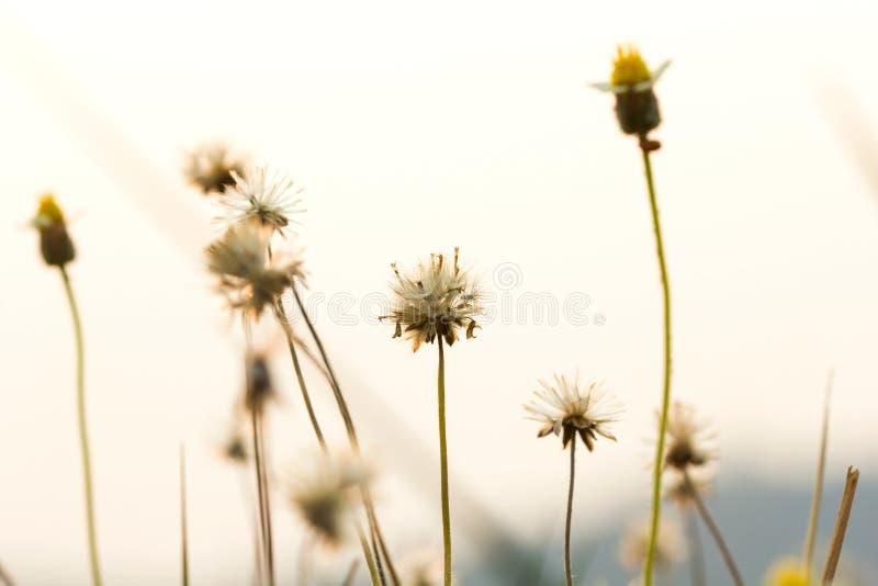 Trawa kwitnie selekcyjną ostrość z płytką głębią pole obraz stock