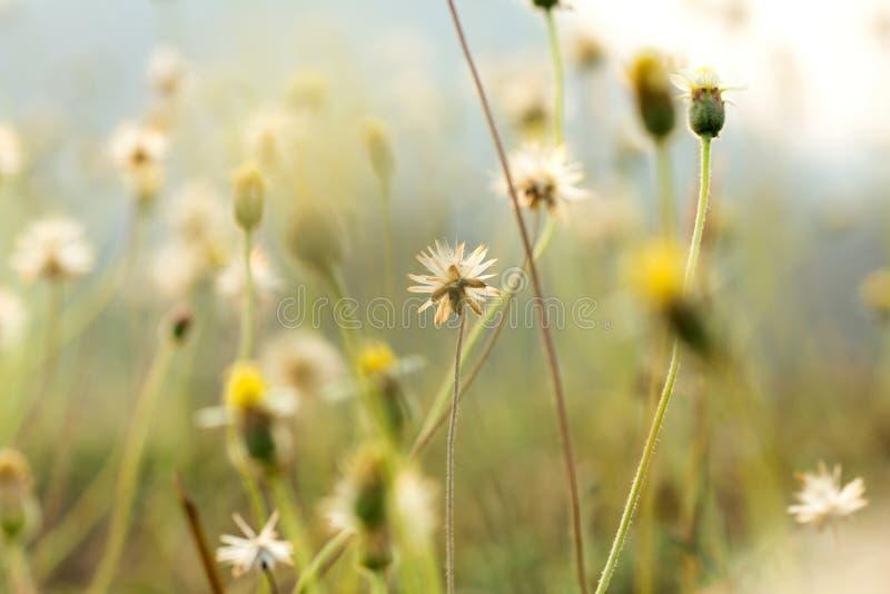 Trawa kwitnie selekcyjną ostrość z płytką głębią pole zdjęcie royalty free