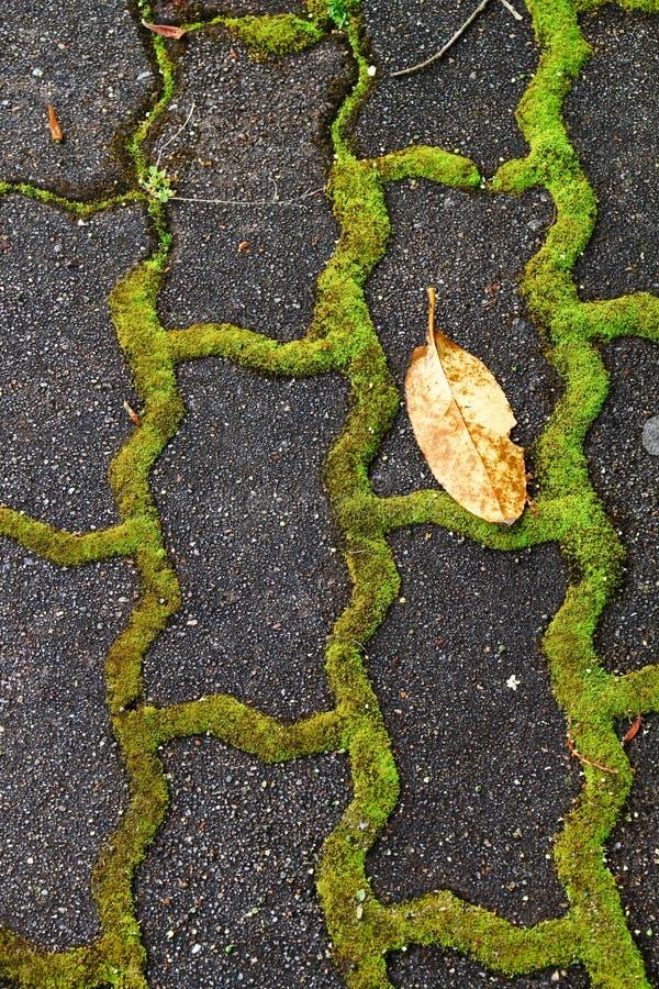 Download Trawa między kamieniami zdjęcie stock. Obraz złożonej z pathway - 28970336
