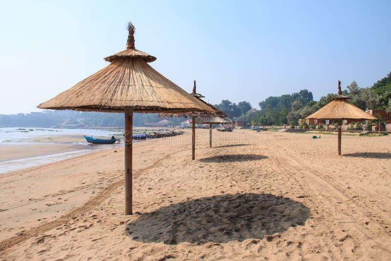 Trawa parasole zdjęcie royalty free