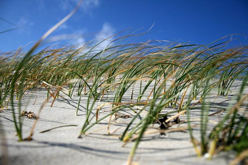 trawa plażowy wiatr fotografia stock