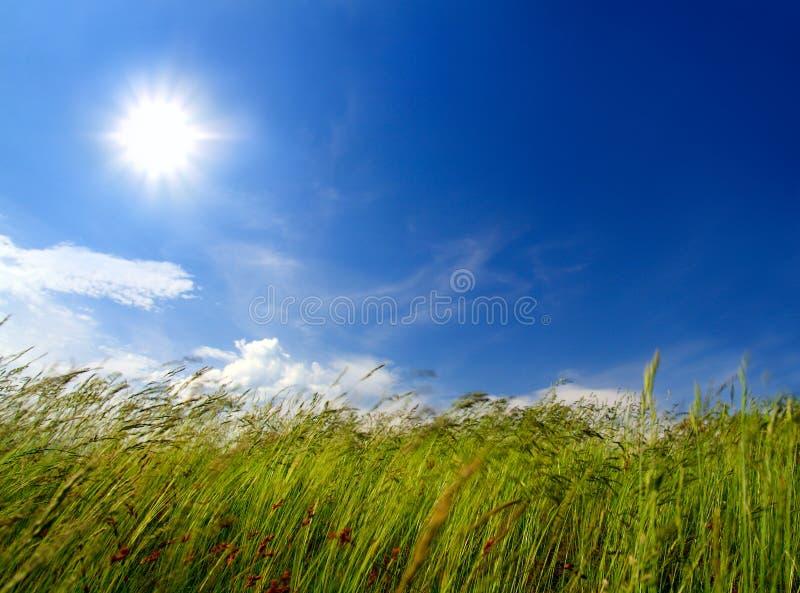 trawa podmuchowy wiatr obraz royalty free