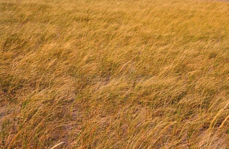 trawa tło zdjęcie stock